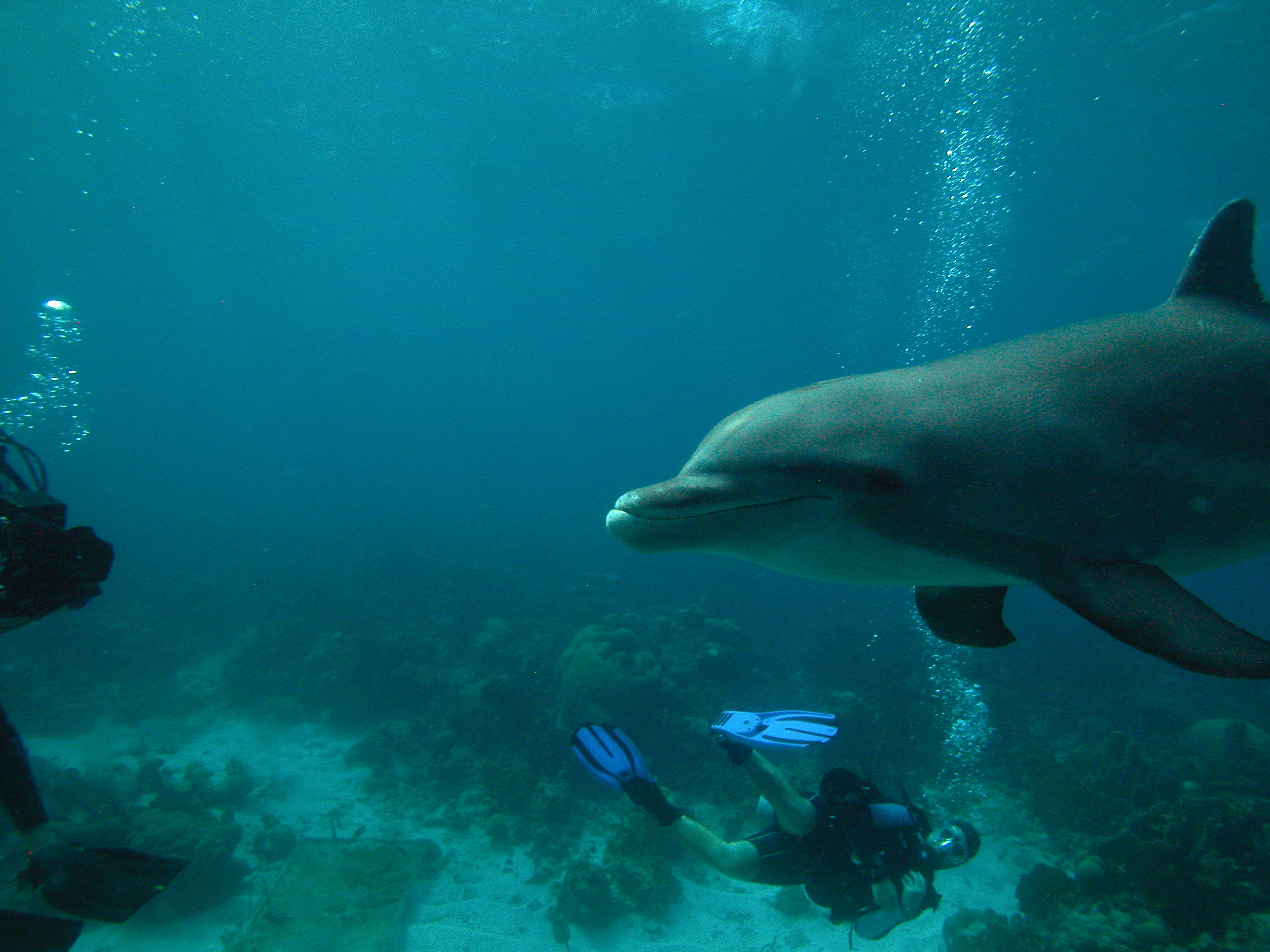 2006 Curacao with Annie the dolphin