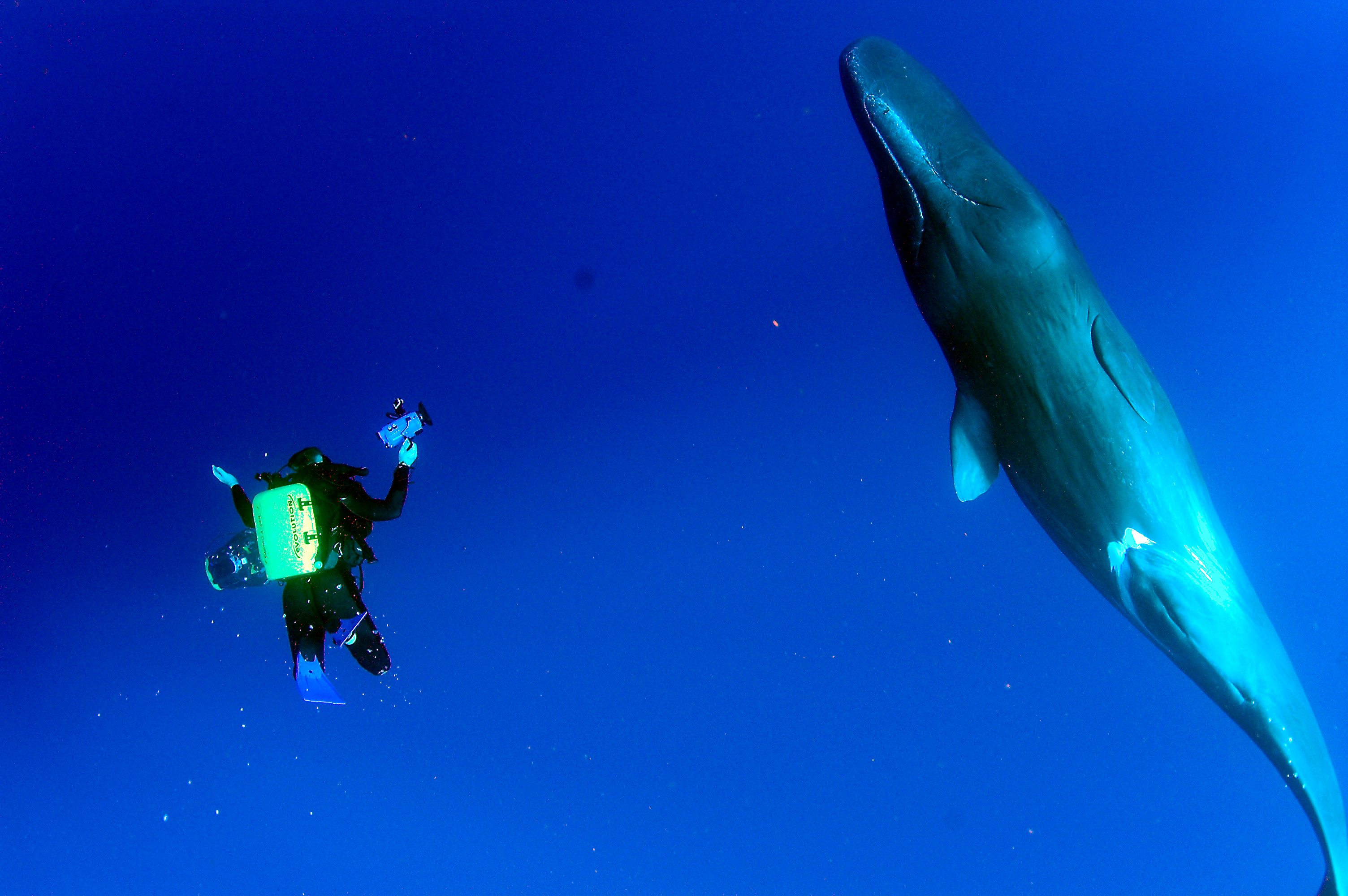 2007 Dominca  diving with Forest Gaithier, John Chatterton and Jeff Bozanic