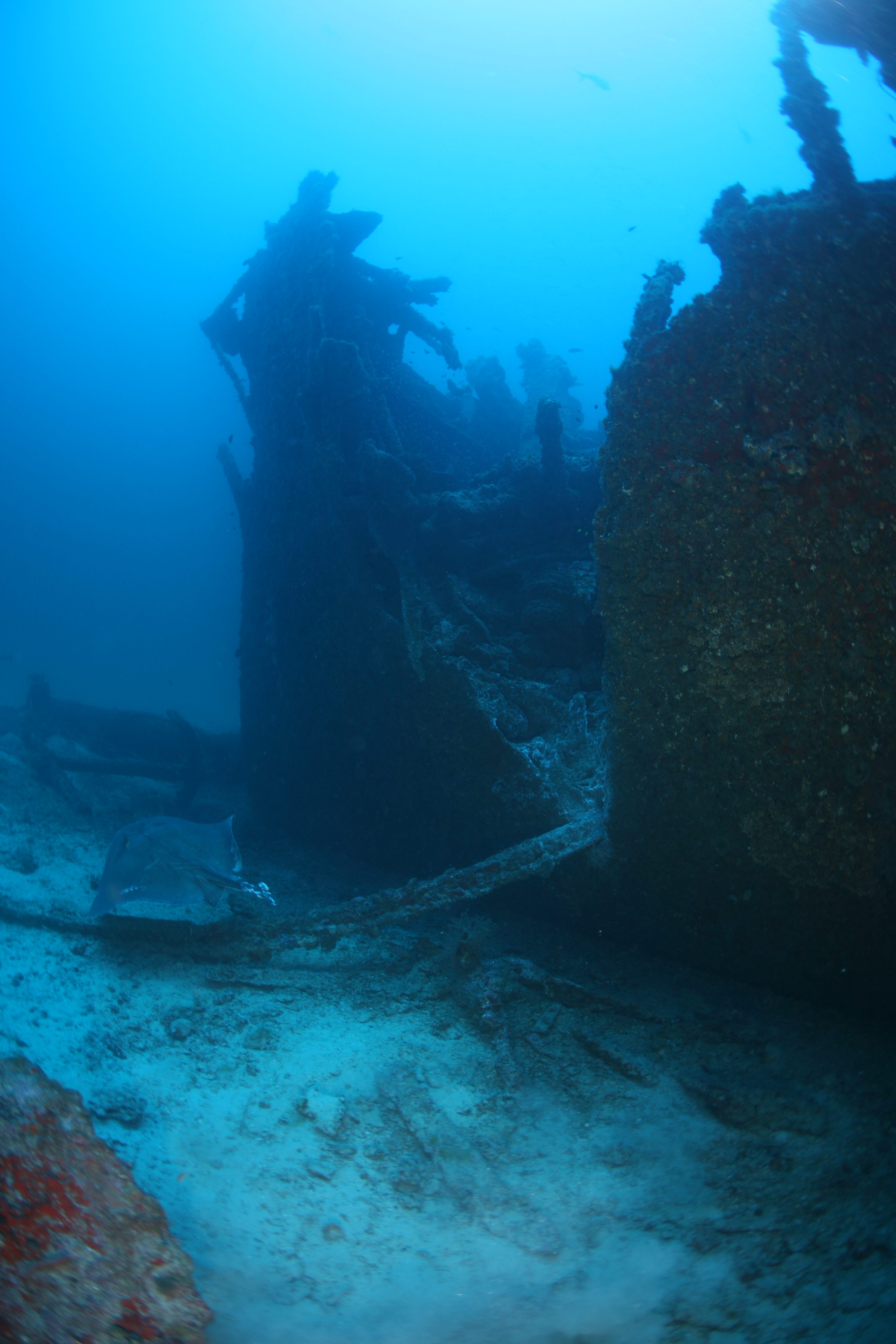 Araby Maid the point of collision that sank the ship