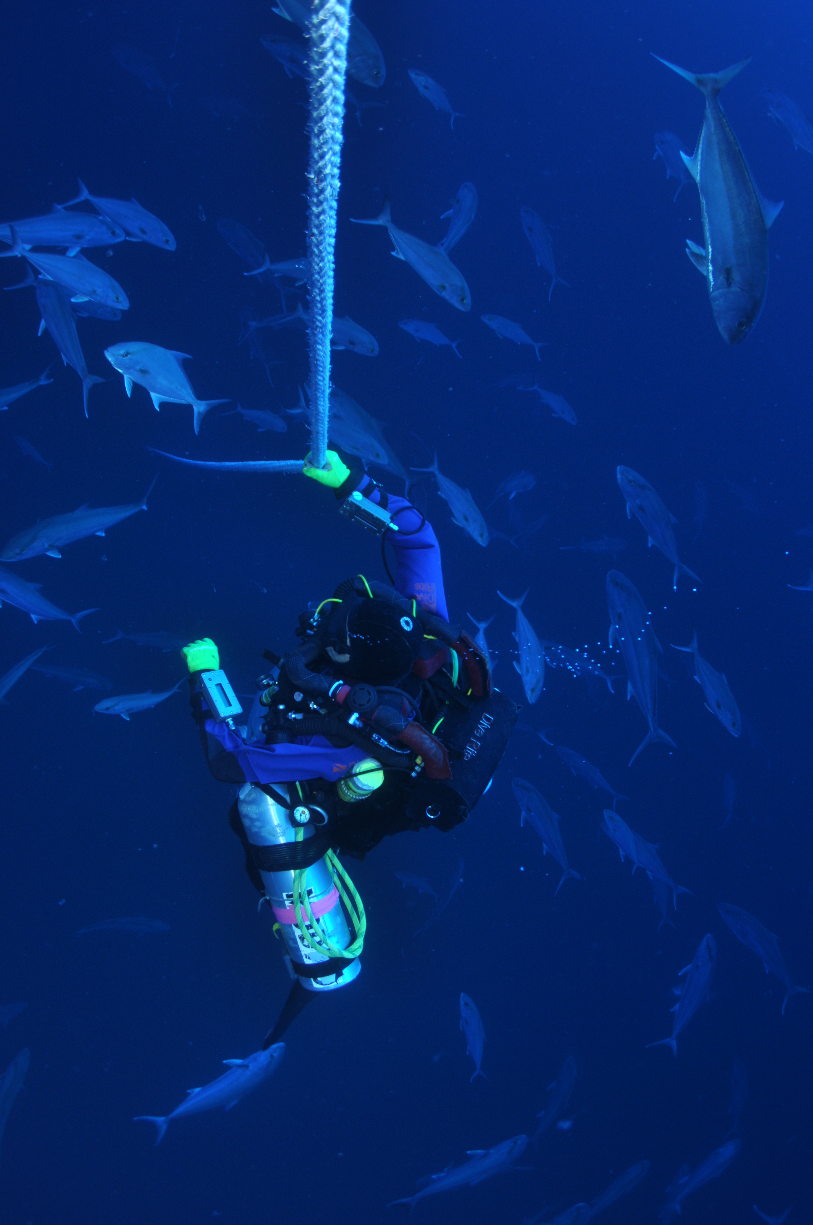 Tortugas decompression stop with Amberjacks