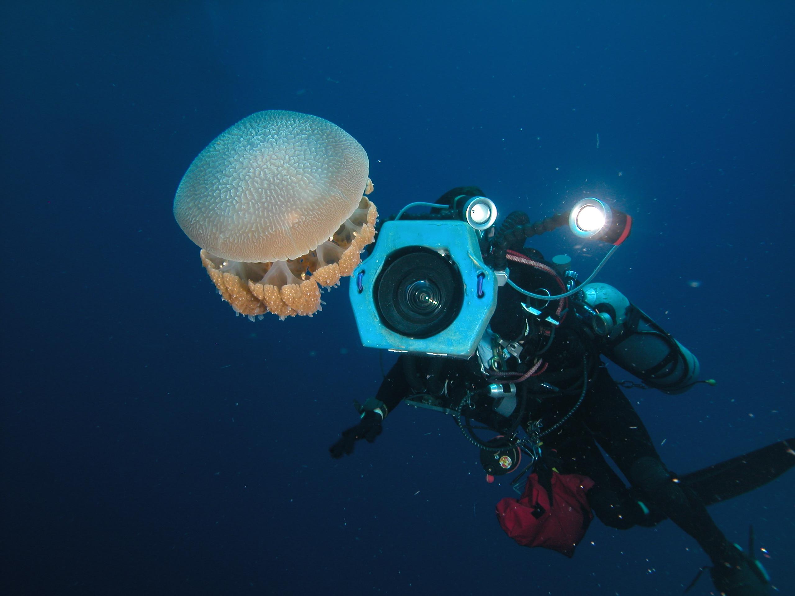 Jellyfish on deco