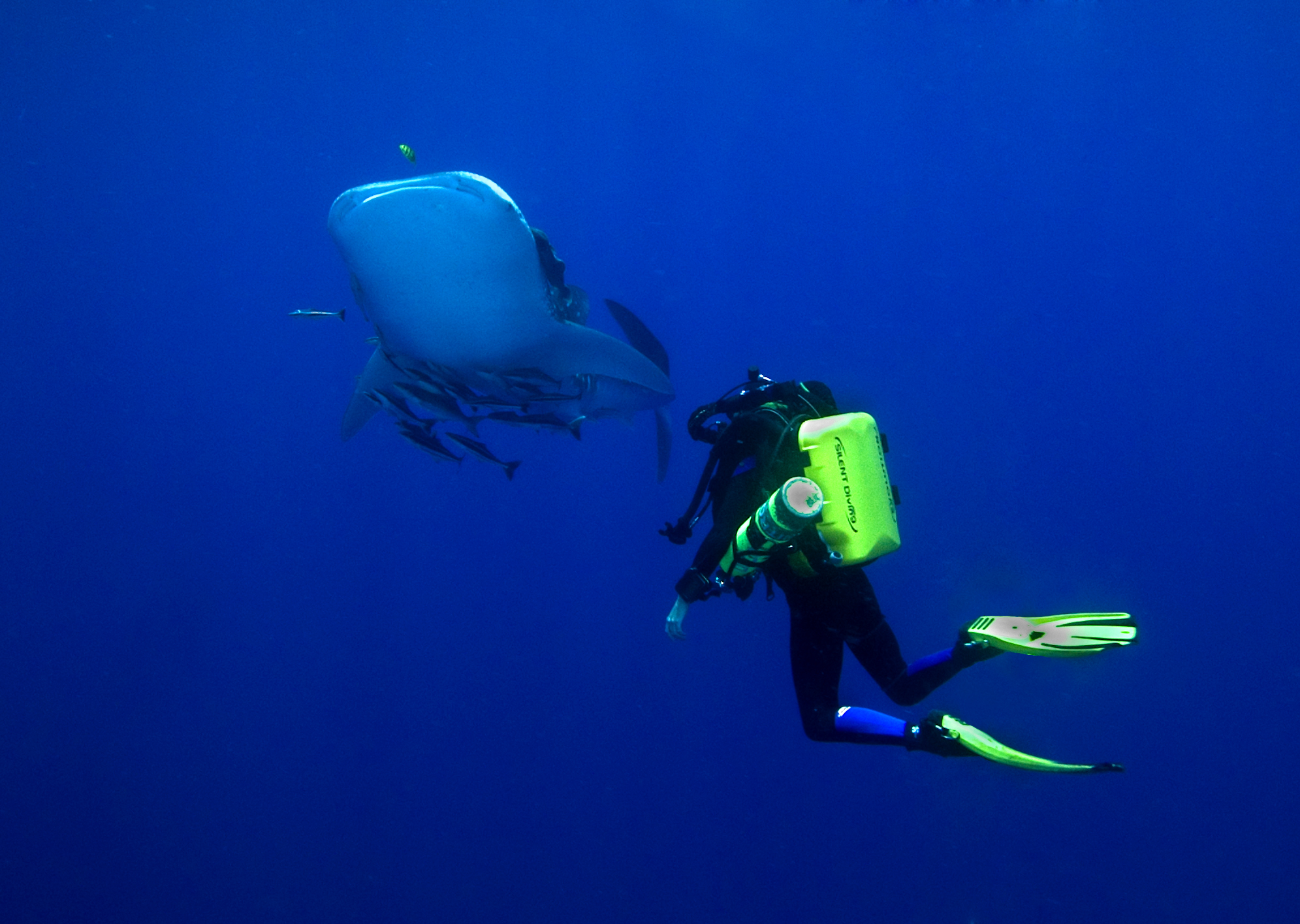 Whales shark and Carrie